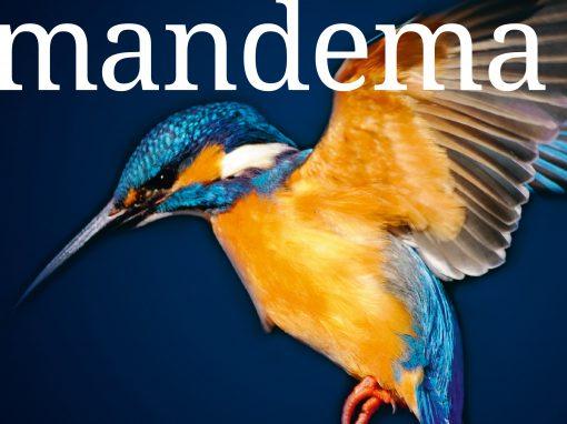 Mandema Magazine | Mandema & Partners